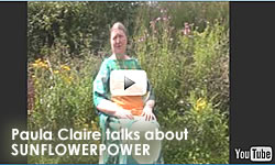Paula Claire - Poet - Talks about Sunflowerpower